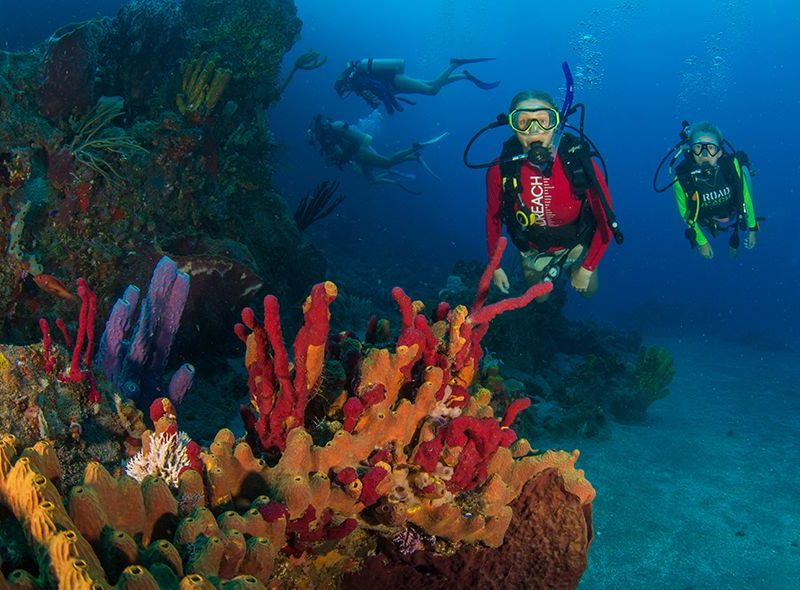 Teens scuba diving on coral reef on Broadreach scuba voyage